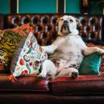 #stayathome: Die 5 besten Beschäftigungen für die Couch